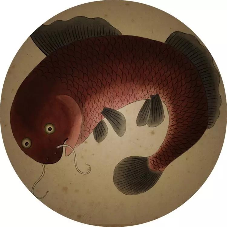 清宫海错图:紫禁城的海底总动员